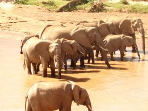 Elephants at watering hole in Samburu National Park