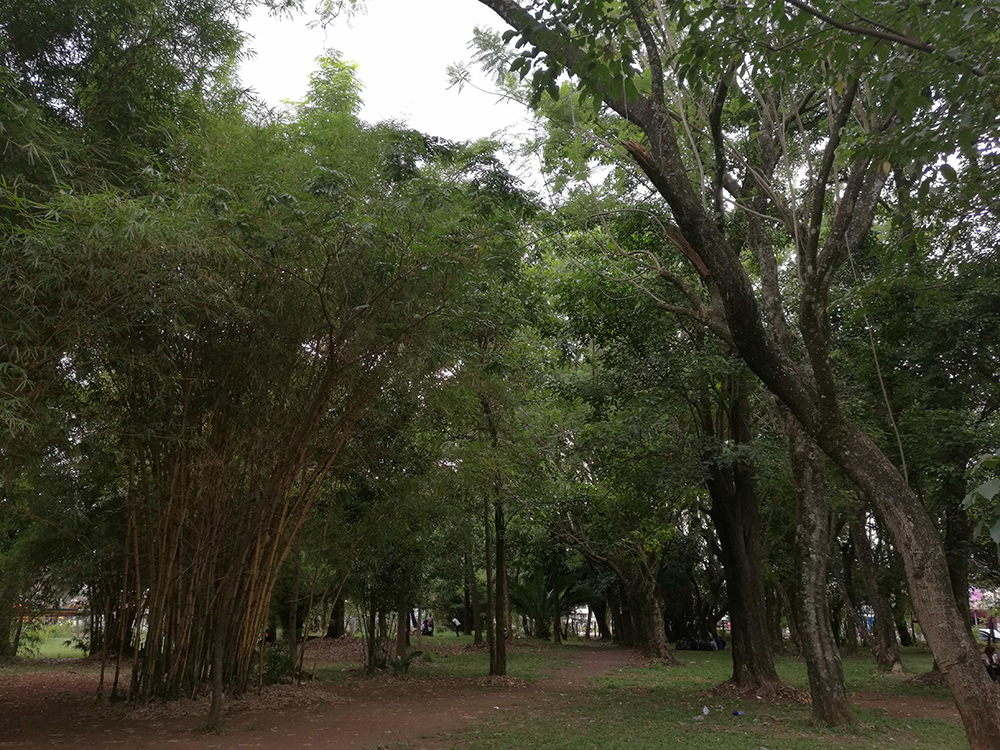 Masinde Muliro Gardens Saga – Migliori Pagine da Colorare